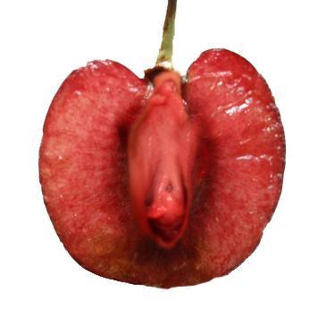 sexy cherry vulva
