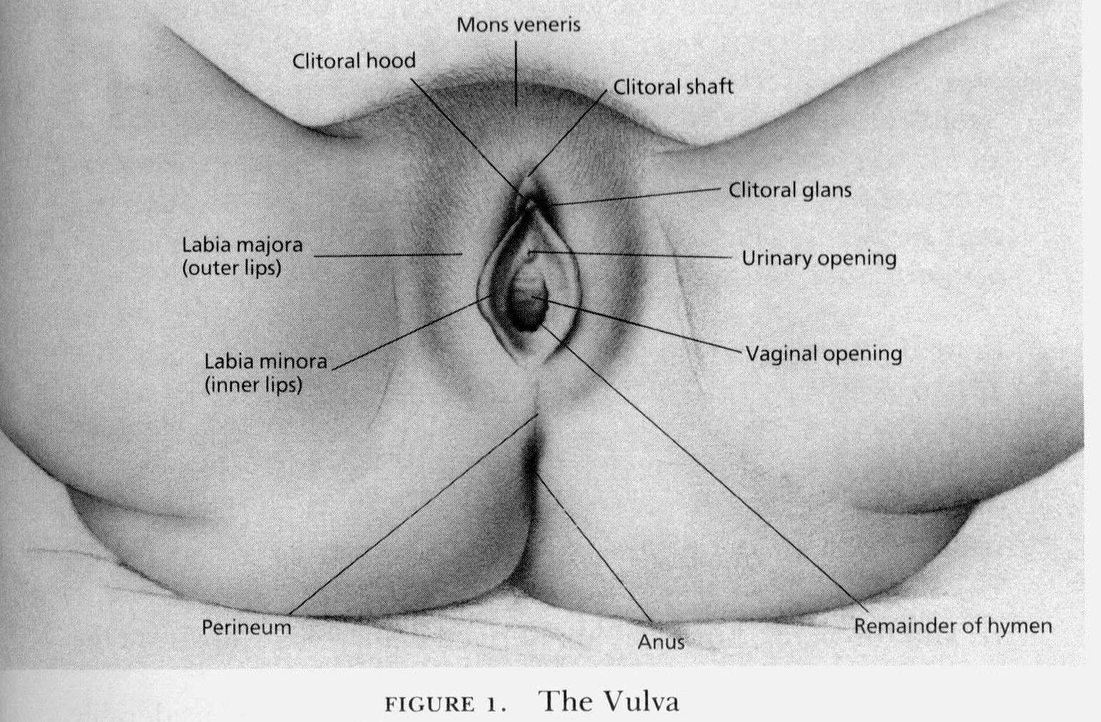 vulva Photo:REUTERS/Lucas Jackson Jessica Alba is considered a sex symbol though ...